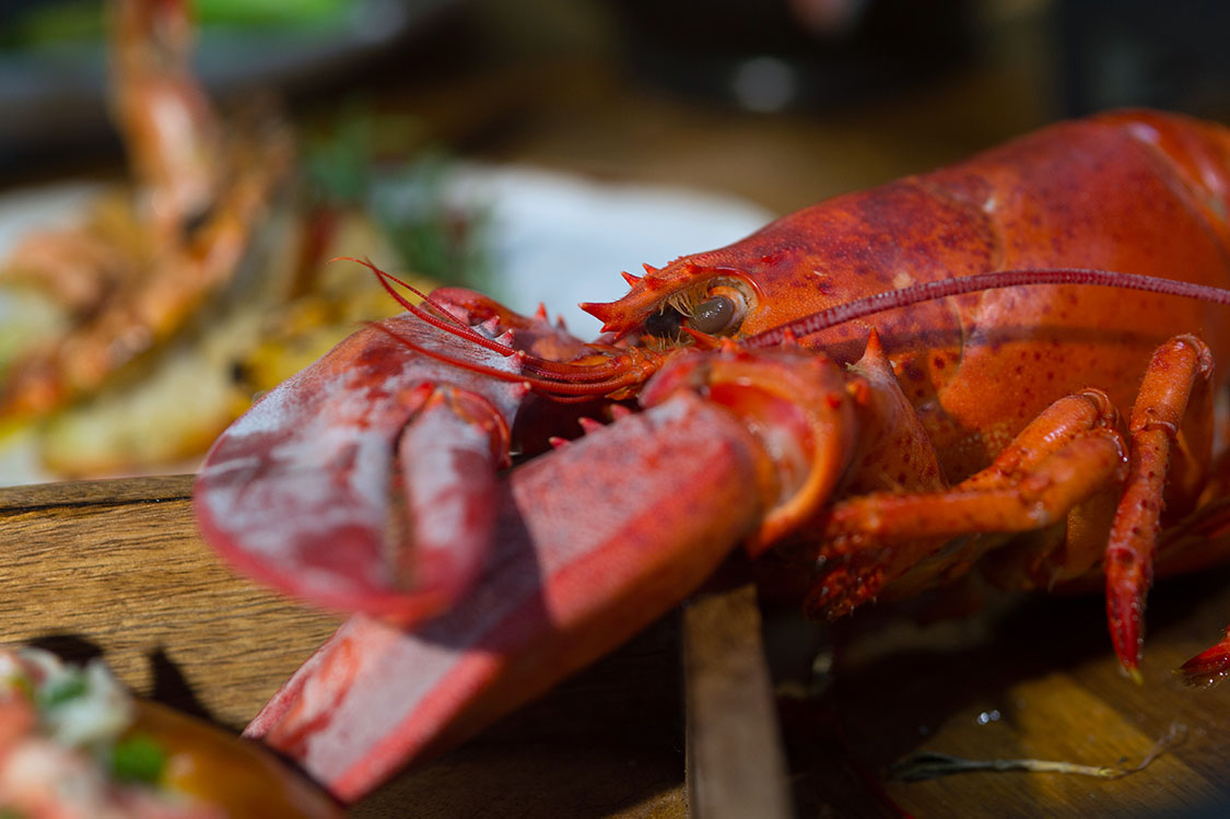 GET CRACKING! LOBSTER MANIA WASHES ASHORE AT  BRULÉ BISTRO EVERY WEEKEND